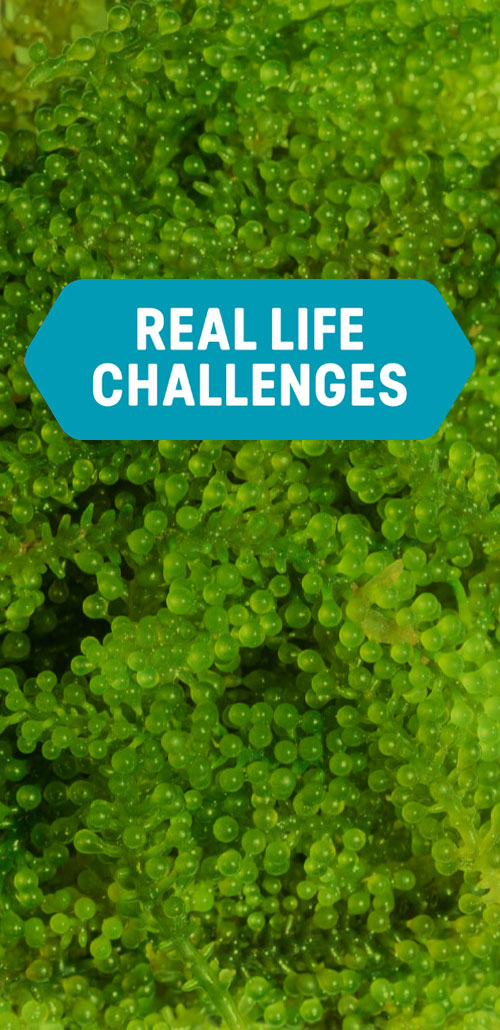 HAS, real life challenges